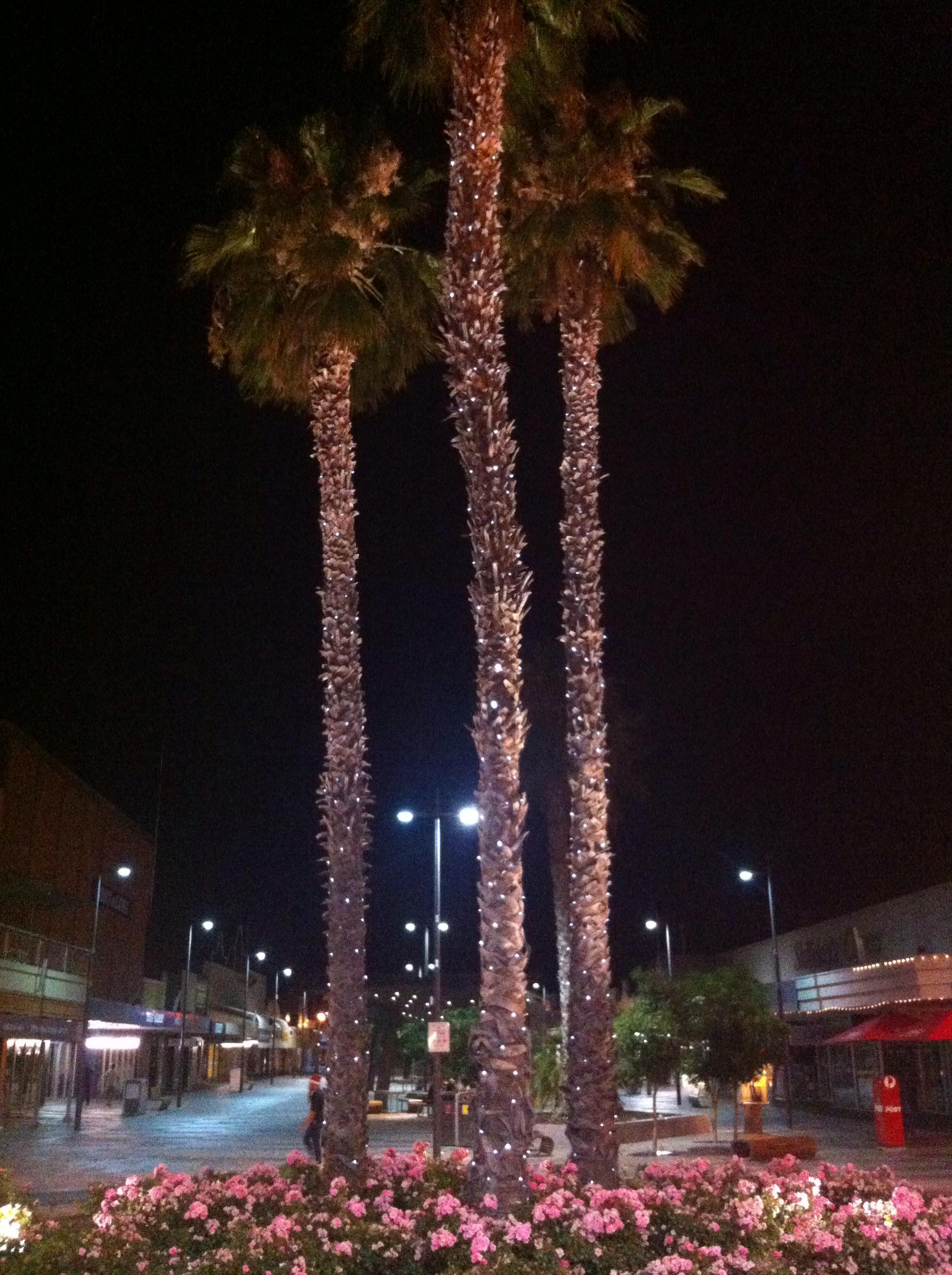Palmen met lichtjes