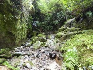 Maori experiences en Whakahoro